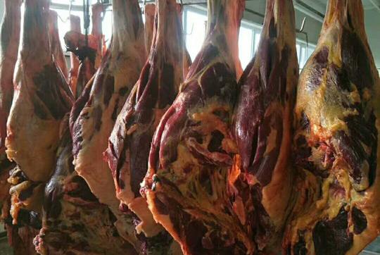 进口熟马肉
