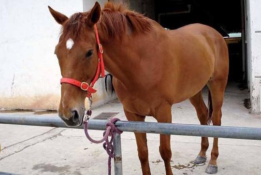 新疆马价格