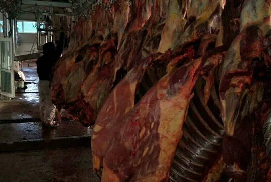蒙古进口马肉